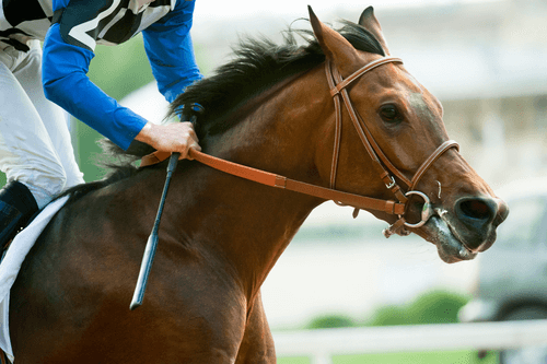 Basic Bets for Horse Racing