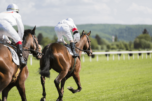 Best Racing Bets to Try